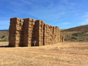 That is a lot of hay! We had never seen such large rectangular bales of hay, each about 3' x 5' x 8'