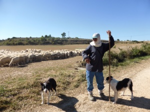 A sheep herder and his two working dogs - took bus to get to his herd. He also spoke four languages!