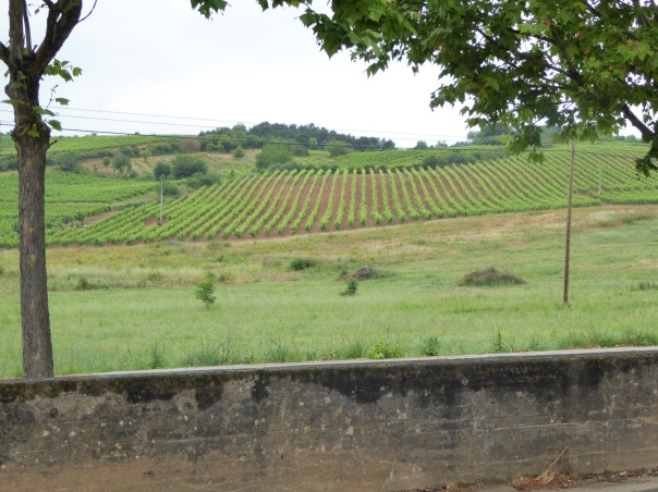 More vineyards  in the hills surrounding  Villafranca. Note how the rows 90 degrees to the slope of the hillside. It was the same in Germany and had to do with improving the irrigation.