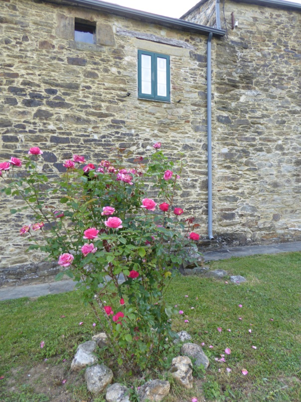 Roses, roses roses everywhere on the Camino. Here outside the manor house.