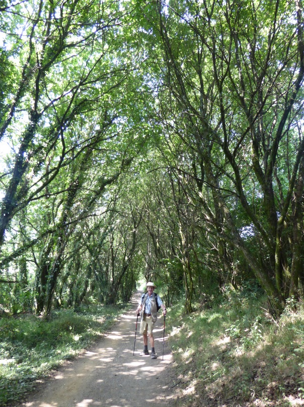 We know you have seen these shots before.... But it is so typical of many paths in the Camino - the umbrella of green provides welcome shade and probably lowers the temperature by as much as ten degrees. Today was hot - into the mid, maybe upper 30's so you can understand just how welcome this  was!