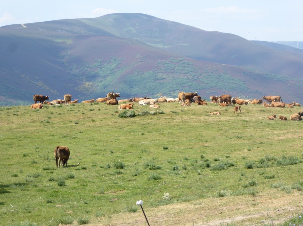 The scene near the top of the Leon Mountains. What a beautiful sight. Bet those cows don't climb it every day.